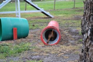 banksia-park-puppies-bunny-14-of-19