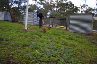 banksia-park-puppies-bunny-15-of-19