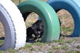 Banksia Park Puppies Jodel - 1 of 27 (22)