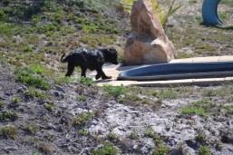 Banksia Park Puppies Jodel - 1 of 27 (8)