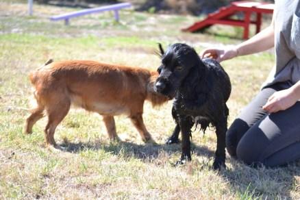 Banksia Park Puppies Jodel - 1 of 27