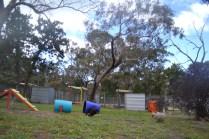 banksia-park-puppies-jodel-5-of-31