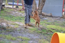 banksia-park-puppies-pippi-6-of-17