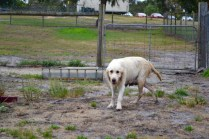 odie-banksia-park-puppies-13-of-20