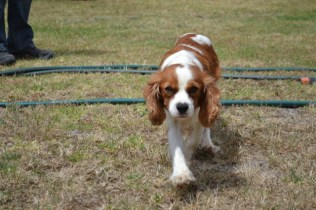 patch-banksia-park-puppies-14-of-17