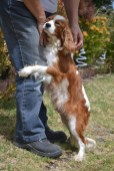 patch-banksia-park-puppies-7-of-17