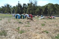 Banksia Park Puppies Playgrounds - 1 of 25 (5)
