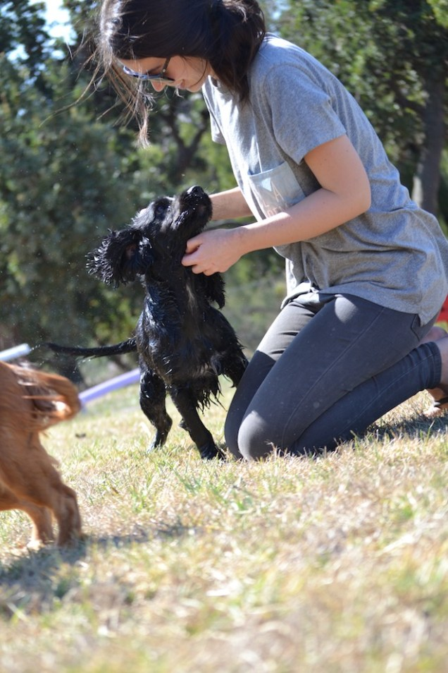 Banksia Park Puppies Playgrounds - 1 of 25