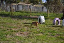 ADULT AGILITY PARK- Banksia Park Puppies - 110 of 117