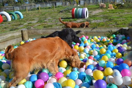 ADULT AGILITY PARK- Banksia Park Puppies - 22 of 117
