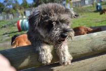 ADULT AGILITY PARK- Banksia Park Puppies - 25 of 117