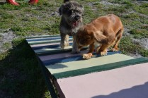 ADULT AGILITY PARK- Banksia Park Puppies - 6 of 117