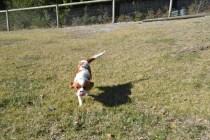 Dasha- Banksia Park Puppies - 4 of 24