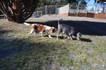 Floss- Banksia Park Puppies - 17 of 22