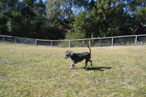 Floss- Banksia Park Puppies - 18 of 22