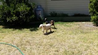 NOODLE- Banksia Park Puppies - 3 of 26