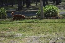 Roza-Cavalier-Banksia Park Puppies - 27 of 47