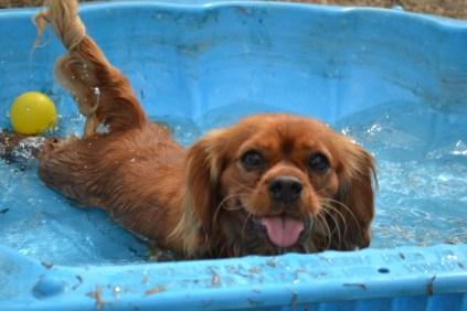 The beautiful Rosara loving the clam-shell pool!