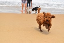 Excursion to the beach!