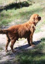 PEACHES - bankisa park puppies - 1 of 28 (22)