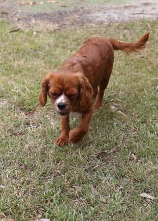 JOY - Bankisa park puppies - 1 of 35 (12)