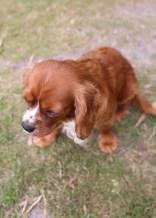 JOY - Bankisa park puppies - 1 of 35 (22)