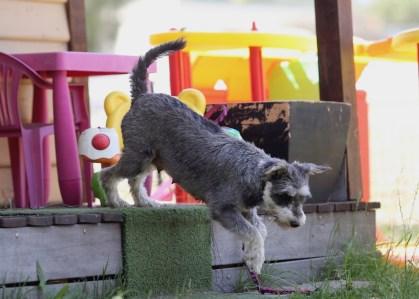 FLEUR - banksia park puppies - 1 of 60 (29)