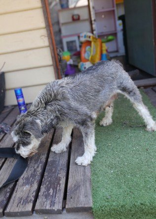 FLEUR - banksia park puppies - 1 of 60 (31)