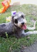 FLEUR - banksia park puppies - 1 of 60 (33)