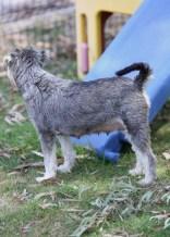 FLEUR - banksia park puppies - 1 of 60 (54)