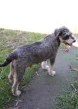 FLEUR - banksia park puppies - 1 of 60 (58)