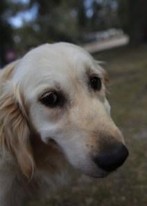 ODIE - Bankisa Park puppies - 1 of 57 (20)
