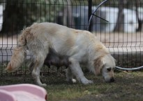 ODIE - Bankisa Park puppies - 1 of 57 (22)