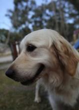 ODIE - Bankisa Park puppies - 1 of 57 (24)