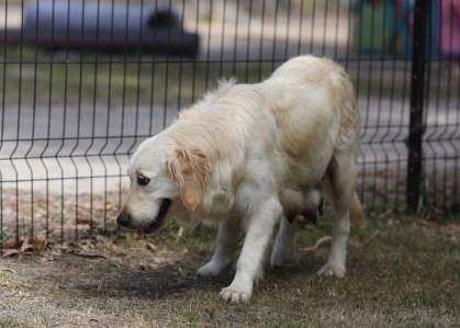 ODIE - Bankisa Park puppies - 1 of 57 (35)