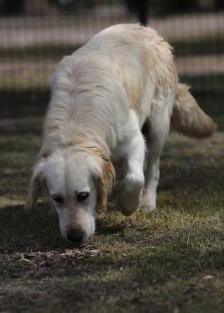 ODIE - Bankisa Park puppies - 1 of 57 (37)