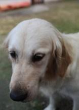 ODIE - Bankisa Park puppies - 1 of 57 (41)
