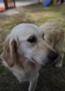 ODIE - Bankisa Park puppies - 1 of 57 (48)