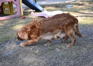 bunny - bankisa park puppies - 1 of 31 (23)