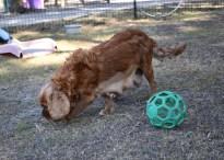 bunny - bankisa park puppies - 1 of 31 (27)