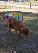 shena - bankisa park puppies - 1 of 36 (17)