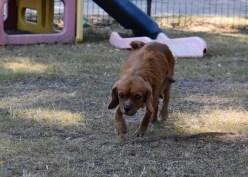 shena - bankisa park puppies - 1 of 36 (2)