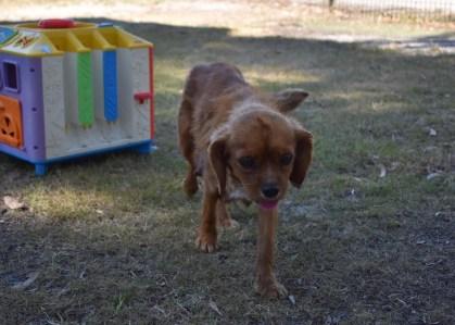 shena - bankisa park puppies - 1 of 36 (31)