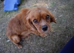 shena - bankisa park puppies - 1 of 36 (33)