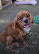 shena - bankisa park puppies - 1 of 36