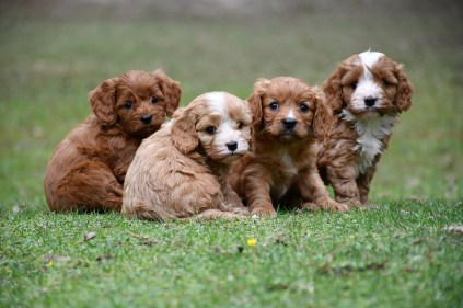 What's even better than one puppy!? Four! If you are lucky enough to know friends and family with paw-pals then why not ask them around for play-group and a photo shoot at the same time!