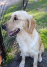 IVY - banskia park puppies - 1 of 50 (11)