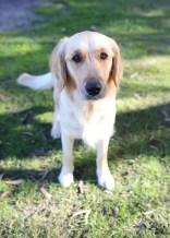 IVY - banskia park puppies - 1 of 50 (16)