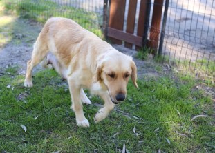 IVY - banskia park puppies - 1 of 50 (27)