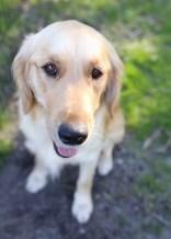 IVY - banskia park puppies - 1 of 50 (33)